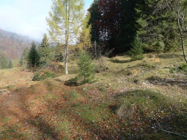 Buckelwiesen NSG Geigelstein nachher